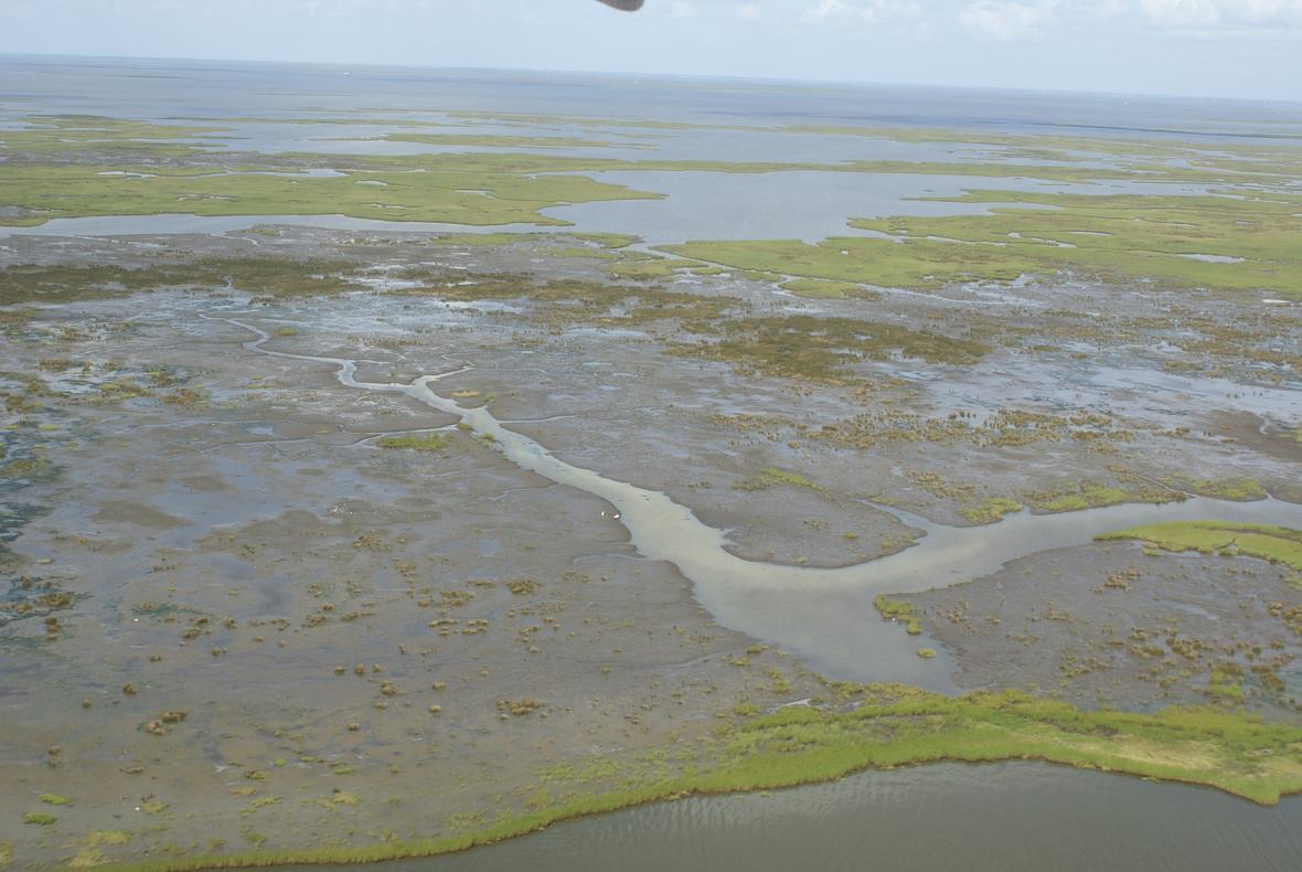 Brown Marsh - Terrebonne Basin, Louisiana